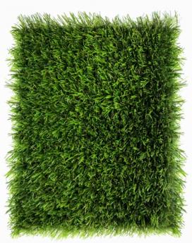 Aritificial Grass - KN Bermuda 25mm - Philippines - 1